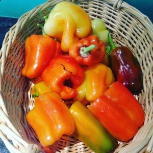 latesummer-peppers